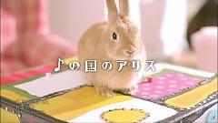 Onpu no Kuni no Alice - Ayana Taketatsu