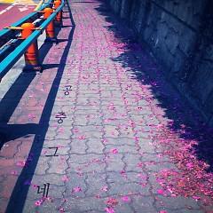 Shadow (Single) - Trapeze