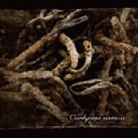 Cordyceps Sinensis - Lycaon