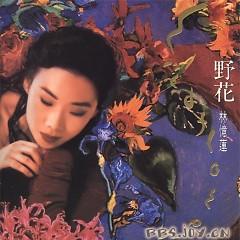 野花/ Hoa Dại (CD2)