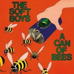 Soft Boys - A Can Of Bees - Robyn Hitchcock