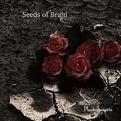 Seeds of Brain