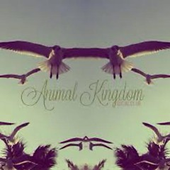 Animal Kingdom (Single) - Social Club