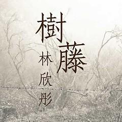 树藤 / Dây Leo - Lâm Hân Đồng