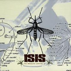 Mosquito Control - Isis