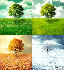Bốn Mùa Yêu Thương - Various Artists