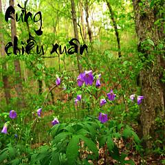 Rừng Chiều Xuân