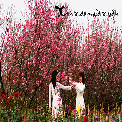 Xôn Xao Mùa Xuân - Various Artists