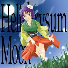 Helichrysum Moon - Business Windows