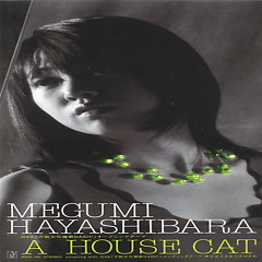 A House Cat