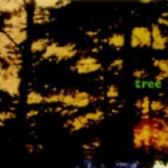 Tree (Live) - Jane Siberry