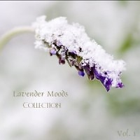 Lavender Moods Collection Vol 1