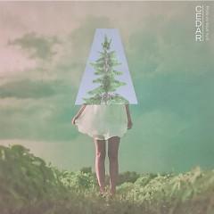 Cedar (Single)